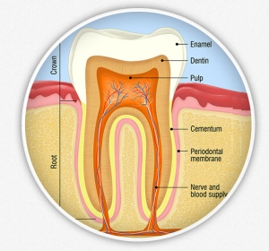 root canal treatment in Austin, TX